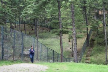 Inside the Takin preserve