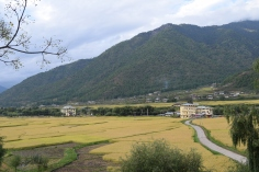 Paddy fields near the Lhakhang