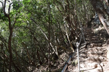 Jungle Trail - Option 2 to reach Sky Bridge