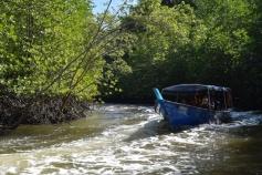 Mangrove boating
