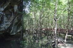 Around the bat cave