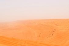 Camels at Wahiba